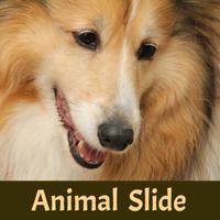 Animal Slide Image Puzzle