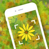 Garden Flower Identification - Plant Identifier Free