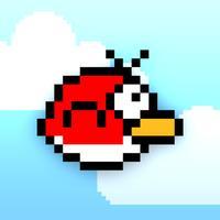 Bolo Bird
