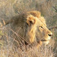 TurnPuzz - Safari