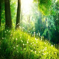 Nature Sounds: Relaxing Audio