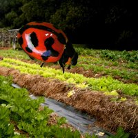 Insects & Organic Gardening
