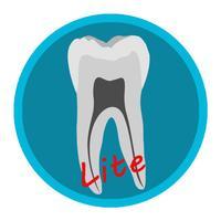Dental Corpus Anatomy Lite