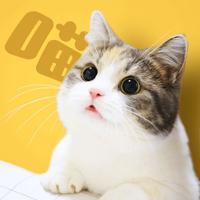 有喵-领养属于你的小猫咪