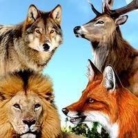 Wild Animal Hunting Pro: Jungle Hunter Simulation