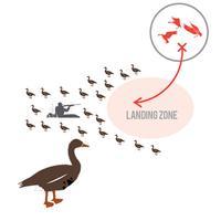 Greylag Goose Hunting Diagram Builder for Goose Hunting