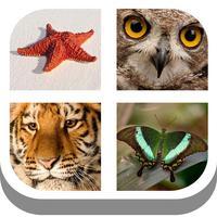 kids pics quiz : animal alphabet learning
