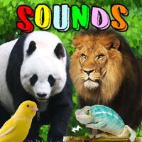 Animal Sounds : Flashcards