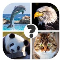 Animals quiz: guess the animal