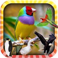 Learn the Birds Phonetic