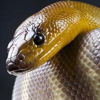 Afraid of Snakes