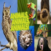Animal Sound For BB