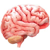 Virtual Reality (VR) Human Brain