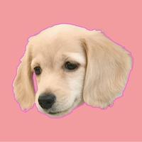 Cleo Daily Sticker Puppy Era