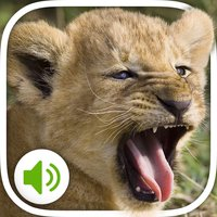 Animal Sounds: More 100 sounds