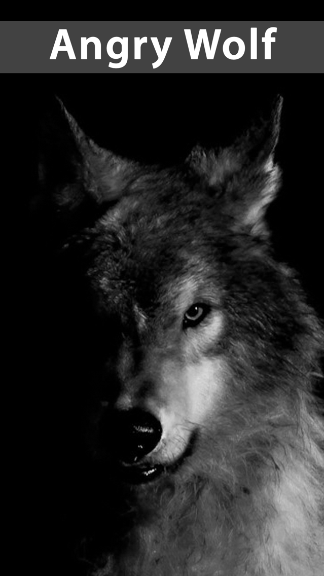 Amazing Wolf Wallpapers App For Iphone Free Download