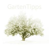Garten Tipps - GartenAkademie.com
