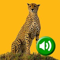 Learning Animal Sounds HD