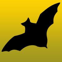 Bat Sounds