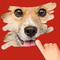 A Pet Game to scratch Hidden Photos, Fun Kids Game