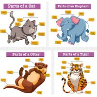 Pictures Of Animals And Their Body Parts Flashcard