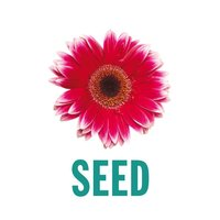 SEED Cards