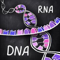 iMolekula: DNA, RNA, proteins