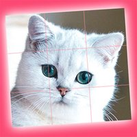 Cute Kittens - Easy Puzzle