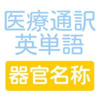 医療通訳英単語 器官名称編