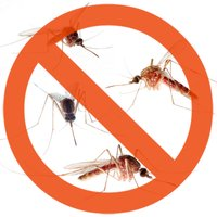 Mosquito  Repellent Ultrasounds