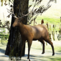 The Wild Hunter