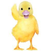 Talking Duckling
