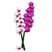 Orchids Sticker Pack
