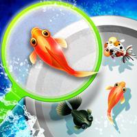 Shin Goldfish Scooping