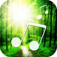 聆听大自然的声音