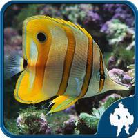 Fish Jigsaw Puzzles - Titan