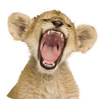 Funny Animal Jokes (The Zoo & Wild Animal Joke Collection)