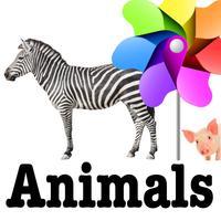 DTT Animals