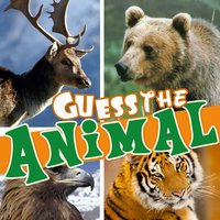 Guess the animal hidden mystery
