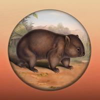 Field Guide to South Australian Fauna
