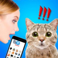 Cat Translate: talk to Kitten