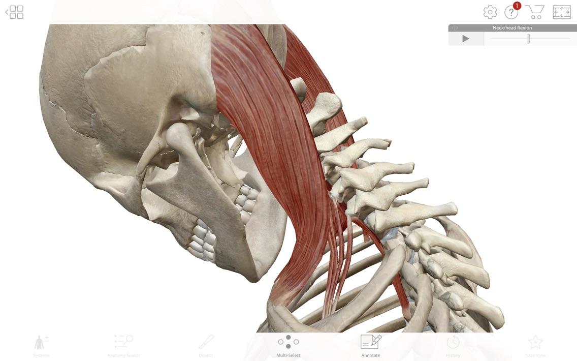 Human Anatomy Atlas 2019 App for iPhone - Free Download