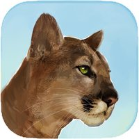 Puma Wild