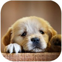 Cute Puppy Puzzle - A fun & addictive puzzle matching game