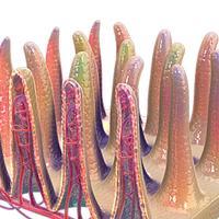 Intestinal Villi 3D