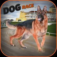 Real Dog Race and Stunts