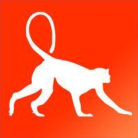 Primate Species: Monkeys, Gorillas, & Macaques