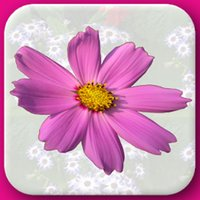 Flowers Flash Cards - Fruits And Vegetables Name Learning Game for your Kids