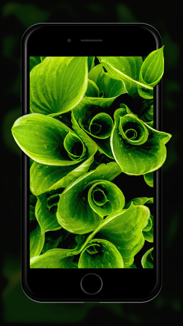 Live wallpapers for mobile phones free download