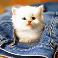 Baby Pet Wallpapers - Collections Of Baby Animals Pictures